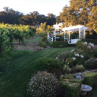 Garden Patio View